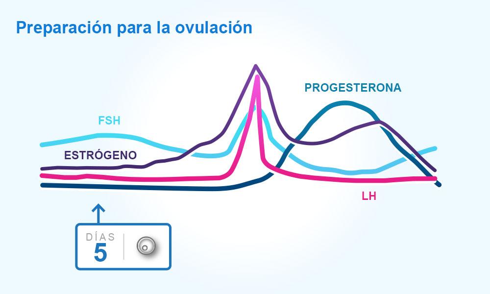 Calendario Fertil.Descripcion Del Ciclo Menstrual La Ovulacion Y Los Periodos De La Mujer